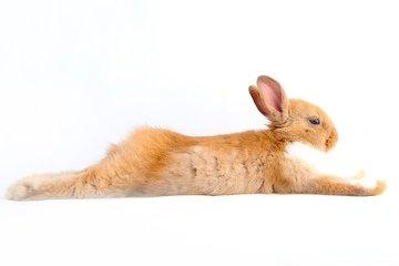 Bücher über Kaninchen