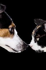 Hunden und Katzen