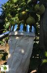 Obst-Apfelpflücker mit stabilem ausziehbarem Griff bis zu 3 Metern