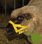 Schaf/Ziegenhalfter Nylon