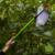 Obst-Apfelpflücker mit stabilem ausziehbarem Griff bis zu 2.40 Metern